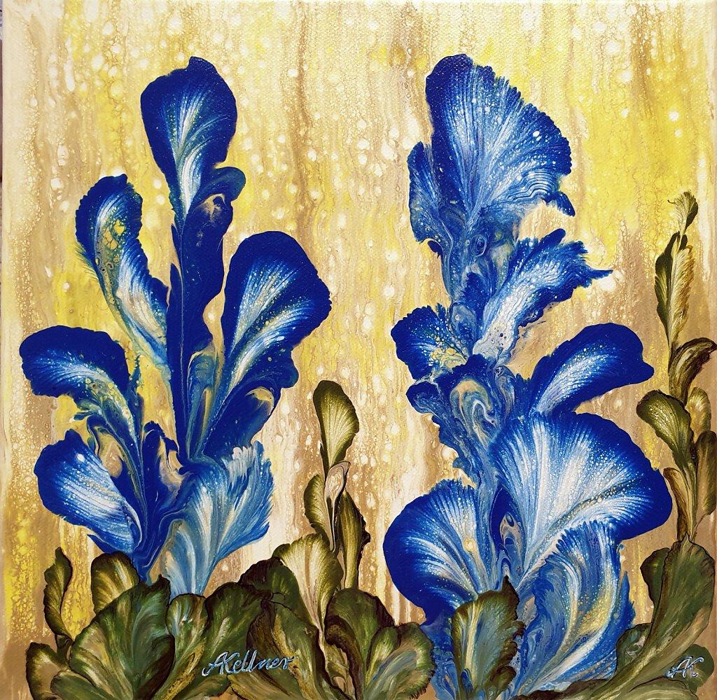Blaue Canna